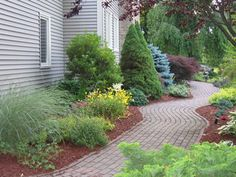 Will often see this combo...  green evergreen + globe blue spruce + a red japanese maple
