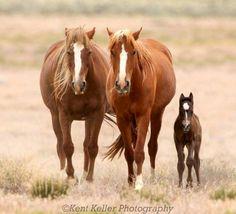 Great Basin Desert, Utah, 2009. Photo by Kent Keller