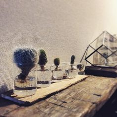 yoshikingさんの、水耕栽培,テラリウム,terrarium ,NO GREEN NO LIFE,DIY,植物,雑貨,サボテン,My Shelf,のお部屋写真