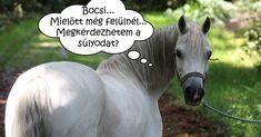#wattpad #ifjsgi-irodalom Milyen ló illik hozzám? Milyen természetű ló a lelki társam? Melyik lovassportot érdemes kipróbálnom? Ezekre, és még sok más lovas kérdésre ad választ ez a könyv a horoszkópod alapján. Jó szórakozást! :D Horses, Animals, Google, Animales, Animaux, Animal, Animais, Horse