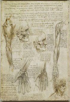Los musculos de la cara y el brazo, y los nervios y las venas de la mano 1510-11