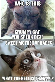 At least Grumpy Cat is cute. http://mbinge.co/1tveffm
