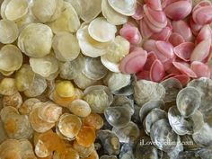 Image result for sunrise tellin seashell