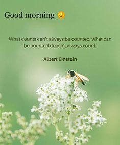 Happy Good Morning Quotes, Good Morning Msg, Morning Greetings Quotes, Good Morning Messages, Good Morning Images, Albert Einstein, Indian Beauty, Great Quotes, Mornings