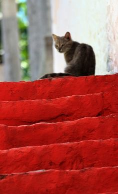 cat in greece. Corfu travel guide by Corfu2travel.com