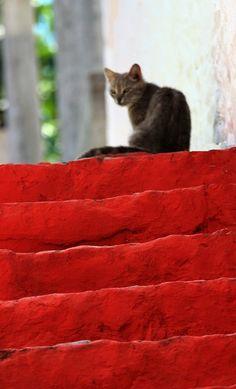 cat in greece. Corfu travel guide by Corfu2travel.com