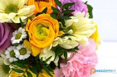 Cvetličarna Zvonček, Frida Bijec s.p. Rose, Flowers, Plants, Jewelry, Pink, Jewlery, Bijoux, Florals, Schmuck