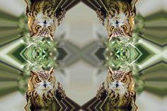 #CrazyCamera owl