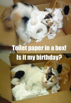 Toilet paper in a box! Is it my birthday?
