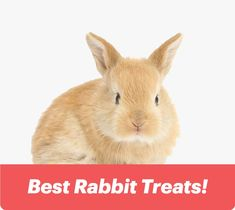Best Rabbit Treats! Rabbit Treats, Small Kittens, Bunny Care, House Rabbit, Guide Dog, Playpen, Budgies, New Toys, Guinea Pigs