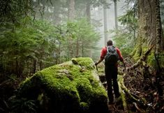 Hiking: Security for Nature Trip and Camping Alone the the Outdoor recreation Survival Guide, Survival Skills, Survival Gear, Survival Weapons, Survival Quotes, Bushcraft Camping, Smoky Mountain National Park, Living Off The Land, Walk In The Woods