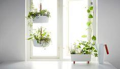 Rovněž obal na květináč Bittergurka se dá zavěsit, dokonce i několik kusů nad sebou, pomocí háčků a tyčky, cena 299 Kč/kus; IKEA