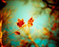 Burnt Orange and Sky Blue