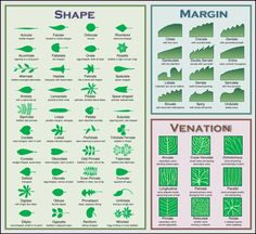 Look Alikes- leaf identification guide by Eat The Weeds