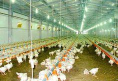 ✿CONNECT Poultry Farm Equipment✿Breeding Equipment