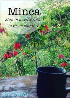 The beautiful Mountain town of Minca, in the Sierra Nevada de Santa Marta, Colombia, is a place to escape to! Escape the pressures of life, escape wifi and escape the heat of Santa Marta! It is quickly growing as a backpacker hub. Stay in a little coffee finca to enjoy pure tranquility.
