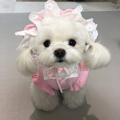 Cute Little Puppies, Cute Dogs And Puppies, Baby Dogs, Little Dogs, Cute Babies, Doggies, Baby Animals Super Cute, Cute Funny Animals, Fluffy Dogs