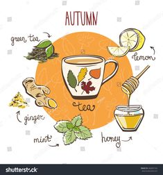 Hand drawn vector illustration with hot autumn tea. Doodle cup and ingredients: lemon, ginger, mint, brew and honey. Recipe card with isolated objects and decorative leaves on white background. Recipe Drawing, Tea Illustration, Autumn Tea, Herbal Magic, Wicca, Cafe Menu, Kitchen Witch, Tea Blends, Tea Recipes