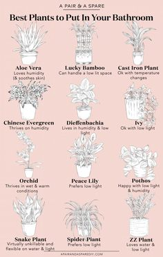 A Guide To The #BestPlantsForYourBathroom | A Pair & A Spare | **If you have pets, make sure the plants you choose are pet-friendly!** Zen Bathroom Decor, White Bathrooms, Modern Bathrooms, Feng Shui Bathroom, Modern White Bathroom, Pictures For Bathrooms, Plants For Bathroom, Amazing Bathrooms, Bathroom Furniture