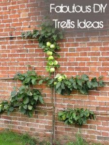 Fabulous DIY Trellis Ideas