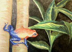 Jungle and Rainforest Art of Costa Rica: Frogs of Costa Rica