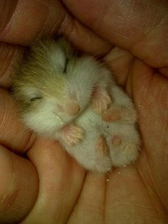 This tiny little bby: | 16 Tiny Fluffs That Will Warm Even The Coldest Heart