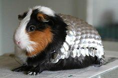 Hand Made Guinea Pig Scale Mail and Helmet Armor | eBay