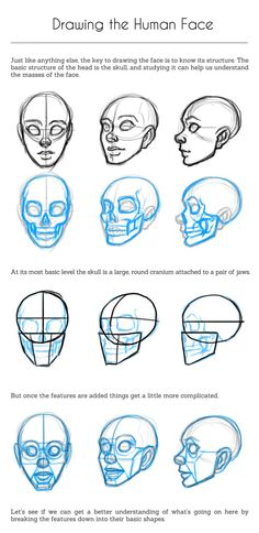 How to draw face based on head skull #facedrawingtutorials