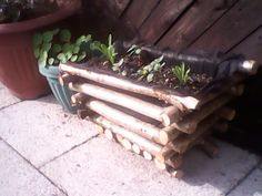 Planter made by my man out of fallen tree branches.