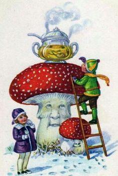 Vintage postcard - amanita muscaria mushrooms