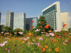 Arguably the loveliest garden in central Tokyo, Hama-Rikyu-Teien (Detatched Palace Garden) is incongruously surrounded by gleaming high-rises at the edge of Tokyo Bay. Walk the garden paths along tide-fed ponds for a little peace.