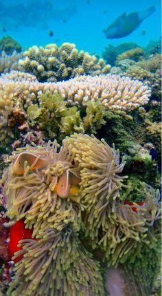 Mnemba Diving