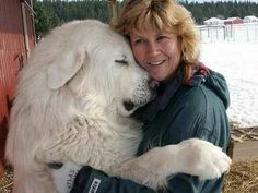 HUGE dog..Great Pyrenees :)