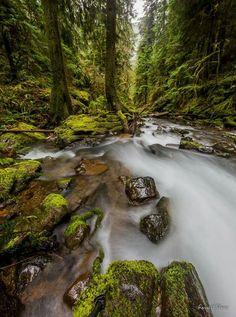 Umpqua national forest