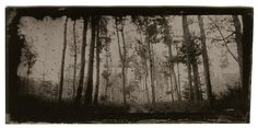 #588 Autumn Forest, Embedded Image Permalink, Twitter, Photography, Painting, Plates, Art, Licence Plates, Art Background
