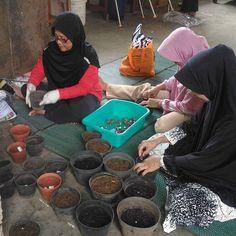 Mari menanam jahe bersama bu ibu macodes  #eshaflora #kulturjaringan #planttissueculture #tissueculture #skalarumahtangga #bogor #kultur #kuljar