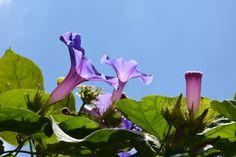 Uma linda flor para plantar no Brise Vegetal.