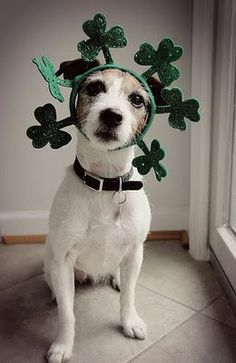 St.Patrick's day dog