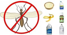 Effective and Easy: How to Get Rid of Gnats in Your Home - Ritely