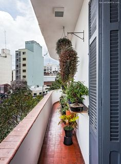varandinha estreita de um apartamento antigo que virou uma espécie de jardim vertical