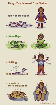 """Snakes are amazing! High five (/tail?) to all the snake fans. The species in this comic are gray-banded kingsnake, smooth greensnake, baby black racer, and timber rattlesnake. They're not to scale vs the people - most are pretty small. Animal Jokes, Funny Animal Memes, Cute Funny Animals, Funny Animal Pictures, Cute Baby Animals, Funny Cute, Animals And Pets, Funny Memes, Les Reptiles"
