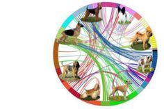 #Este es el mapa más completo de la evolución de las razas de perros - ElEspectador.com: ElEspectador.com Este es el mapa más completo de…