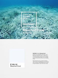 The unofficial Pantone color of the year 2020 Design Web Design Ledger Web Design, 2020 Design, Colour Schemes, Color Trends, Colour Palettes, Color Of The Year, All The Colors, Bleu Pale, Pantone 2020