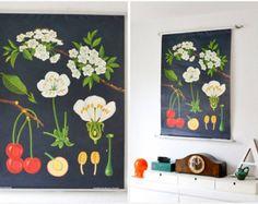 Vintage Jung Koch Quentell school pull down chart map cherry flower botanical West German biology print