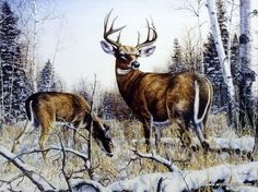A whitetail deer buck stands guard in the fields near a wooded area, as a doe grazes near by. Standing Guard comes as an open edition print in two different size options. Wildlife Paintings, Wildlife Art, Deer Paintings, Deer Pictures, Deer Pics, Deer Drawing, Western Crafts, Deer Art, Palette