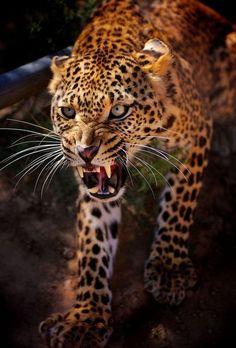 <3 wild life