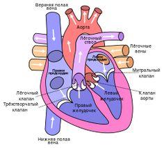 Heart ru.svg