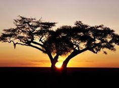 Resultado de imagem para AFRICA IMAGEM