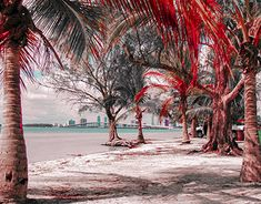 """Check out new work on my @Behance portfolio: """"Florida / Miami"""" http://be.net/gallery/62370277/Florida-Miami"""