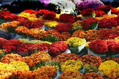 Union Square Flower Market